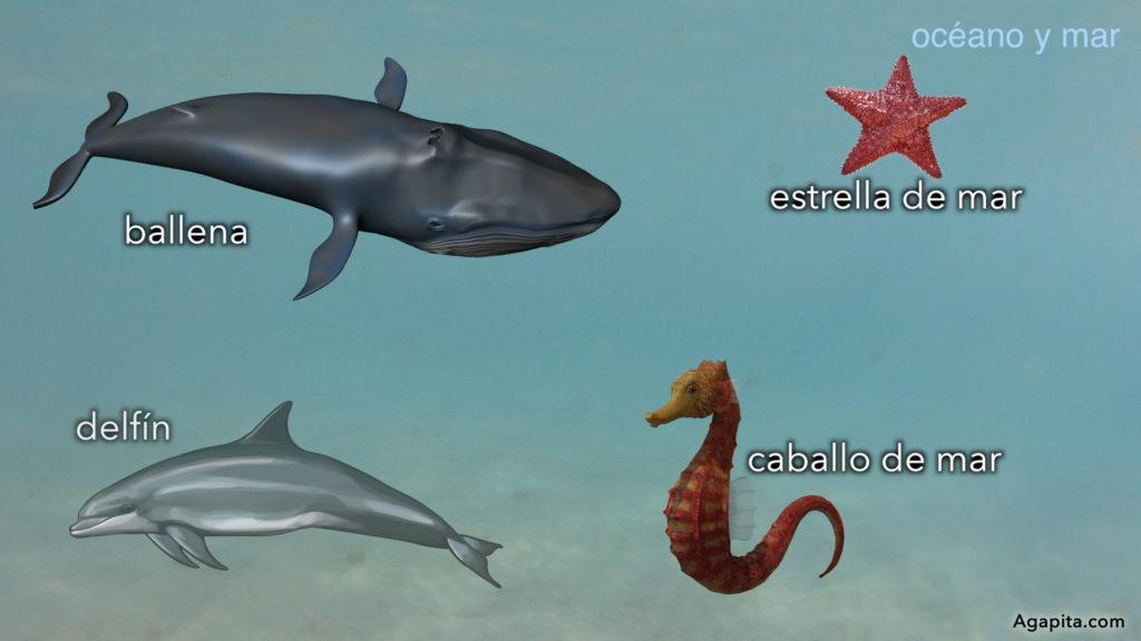 Hábitat de los animales acuáticos - océano y mar, ballena, delfín, estrella de mar, caballo de mar