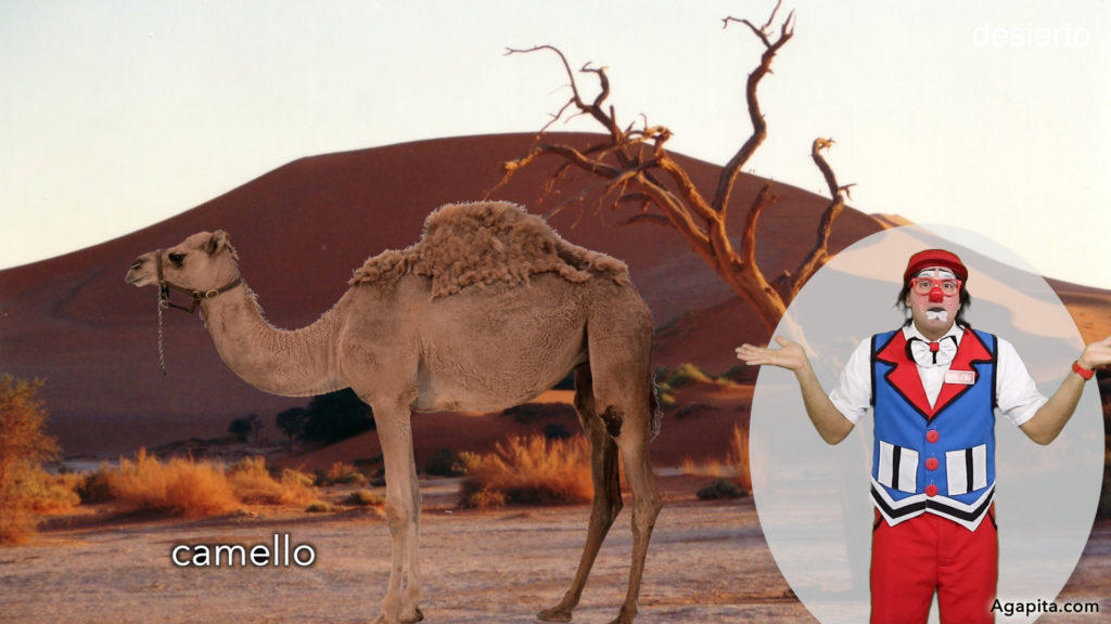 Hábitat de los animales terrestres - desierto, camello